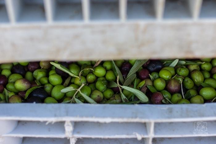 jak sprawdzić czy oliwa jest dobra? / Chilli, Czosnek i Oliwa